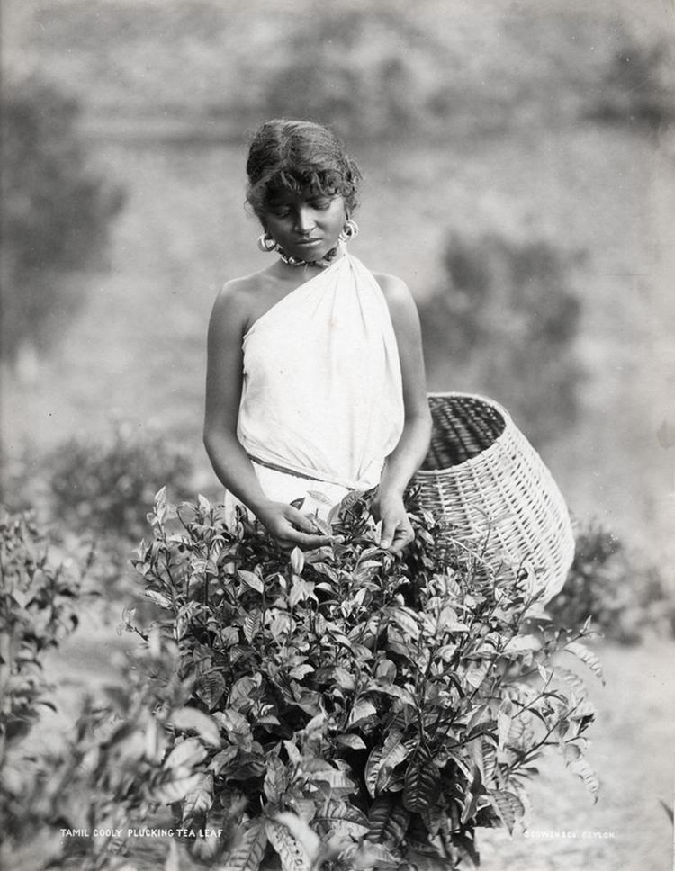 Редчайшие фотографии о повседневной жизни Шри-Ланки в 1880-х годах 15