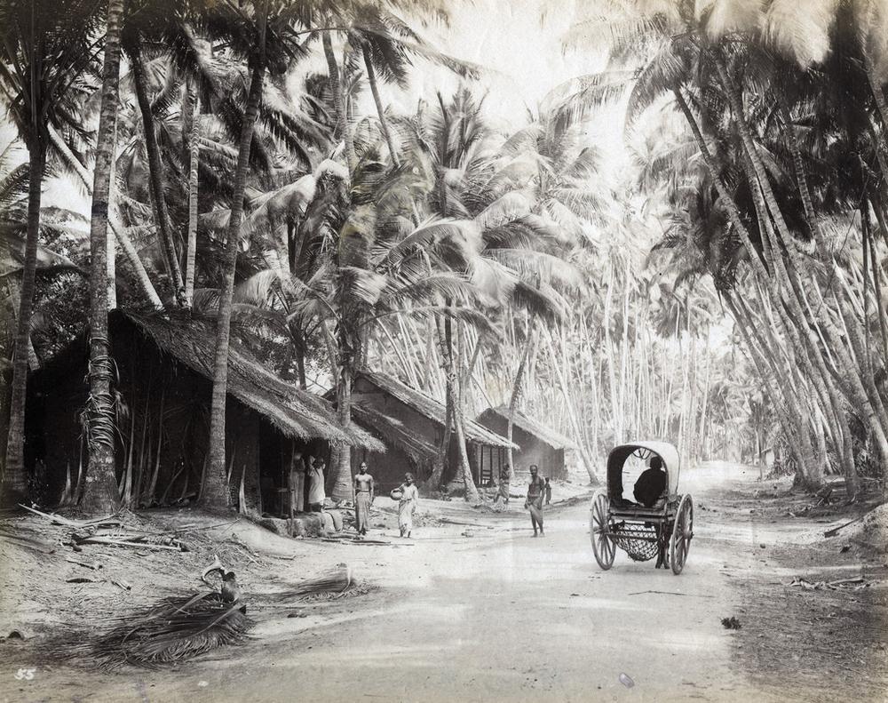 Редчайшие фотографии о повседневной жизни Шри-Ланки в 1880-х годах 6