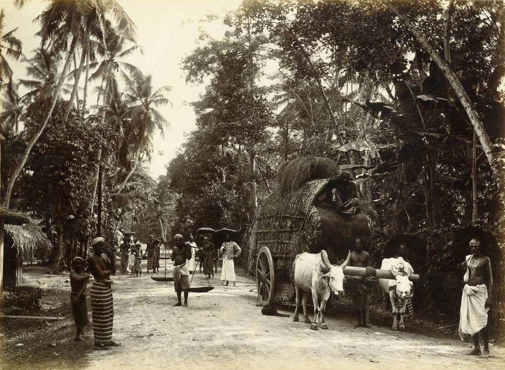 Редчайшие фотографии о повседневной жизни Шри-Ланки в 1880-х годах 7