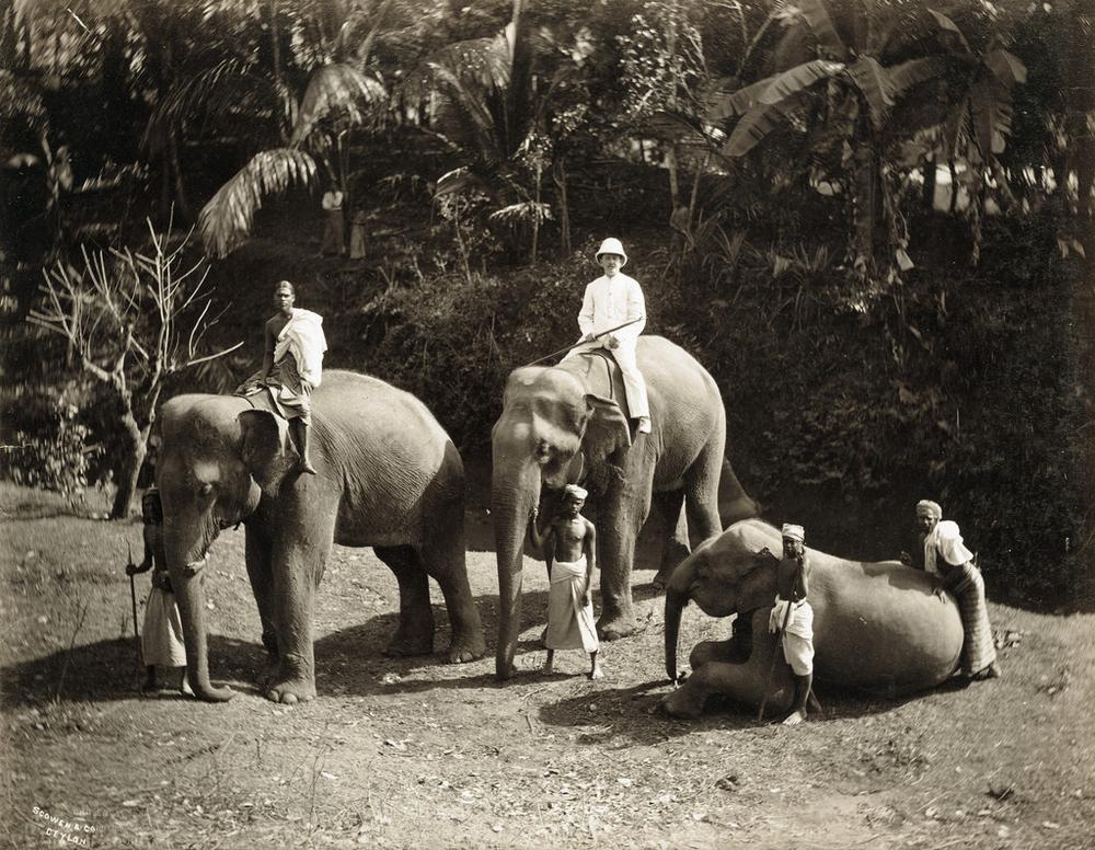 Редчайшие фотографии о повседневной жизни Шри-Ланки в 1880-х годах 8