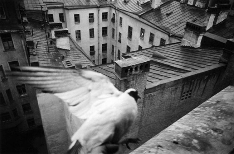 Фотограф Петербурга Борис Смелов 15
