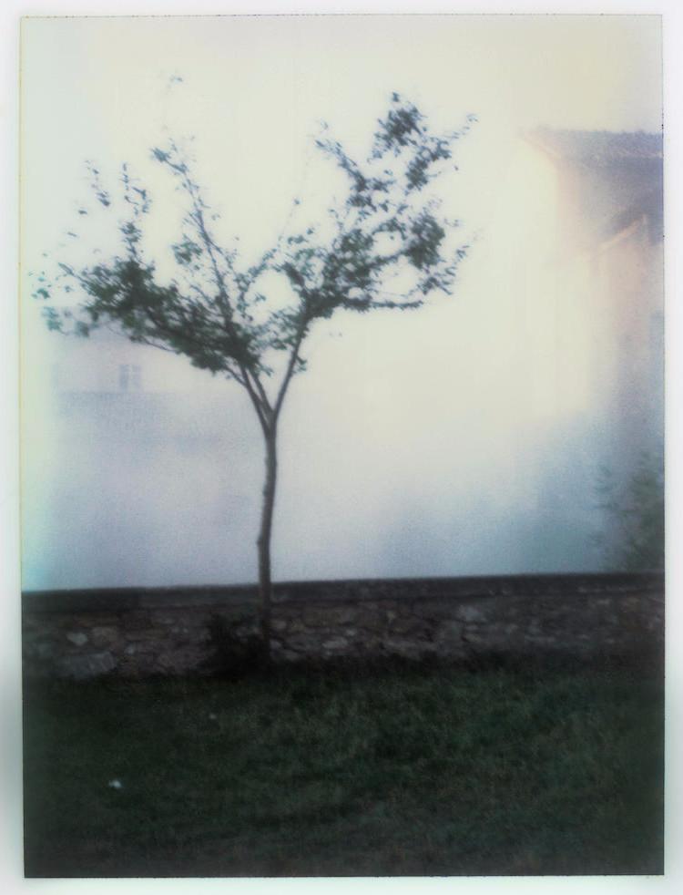 Андрей Тарковский фотографии полароид 3