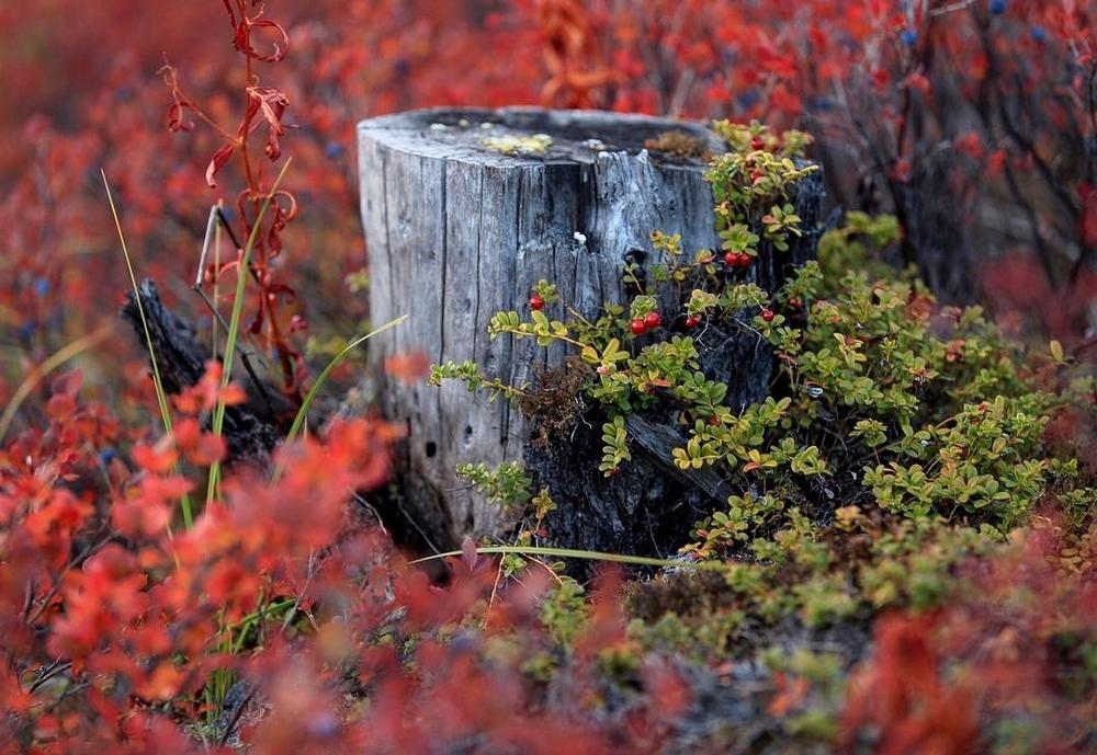 Осенняя Колыма, туманы Приморья, озёра и горы в пейзажных фотографиях Тони Андреевой  2