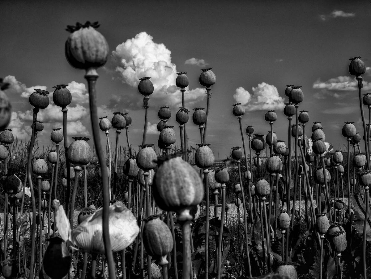 Победители фотоконкурса Black &White International Award Rome  17