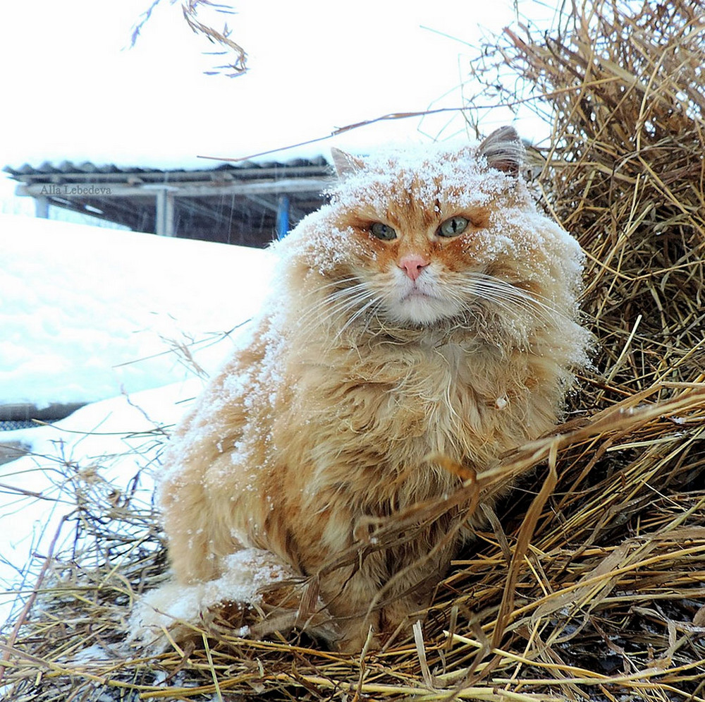 koshki foto Ally Lebedevoy 32