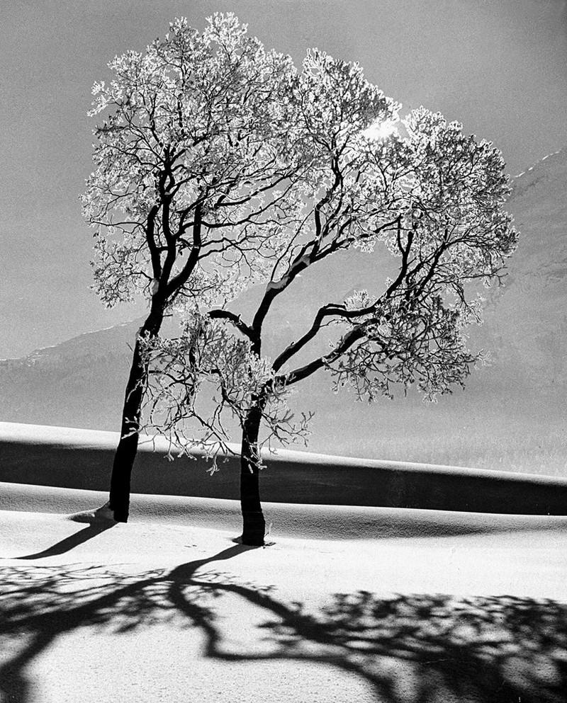 фотограф Айзенштадт Alfred 62