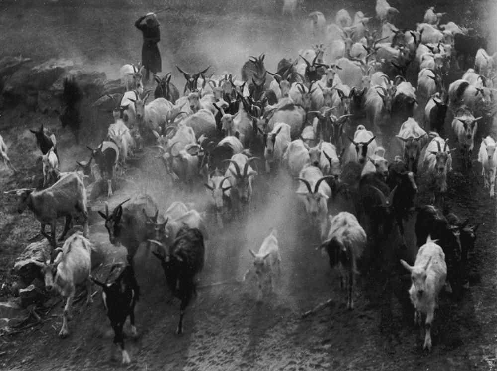 fotograf Erne Vadash 4