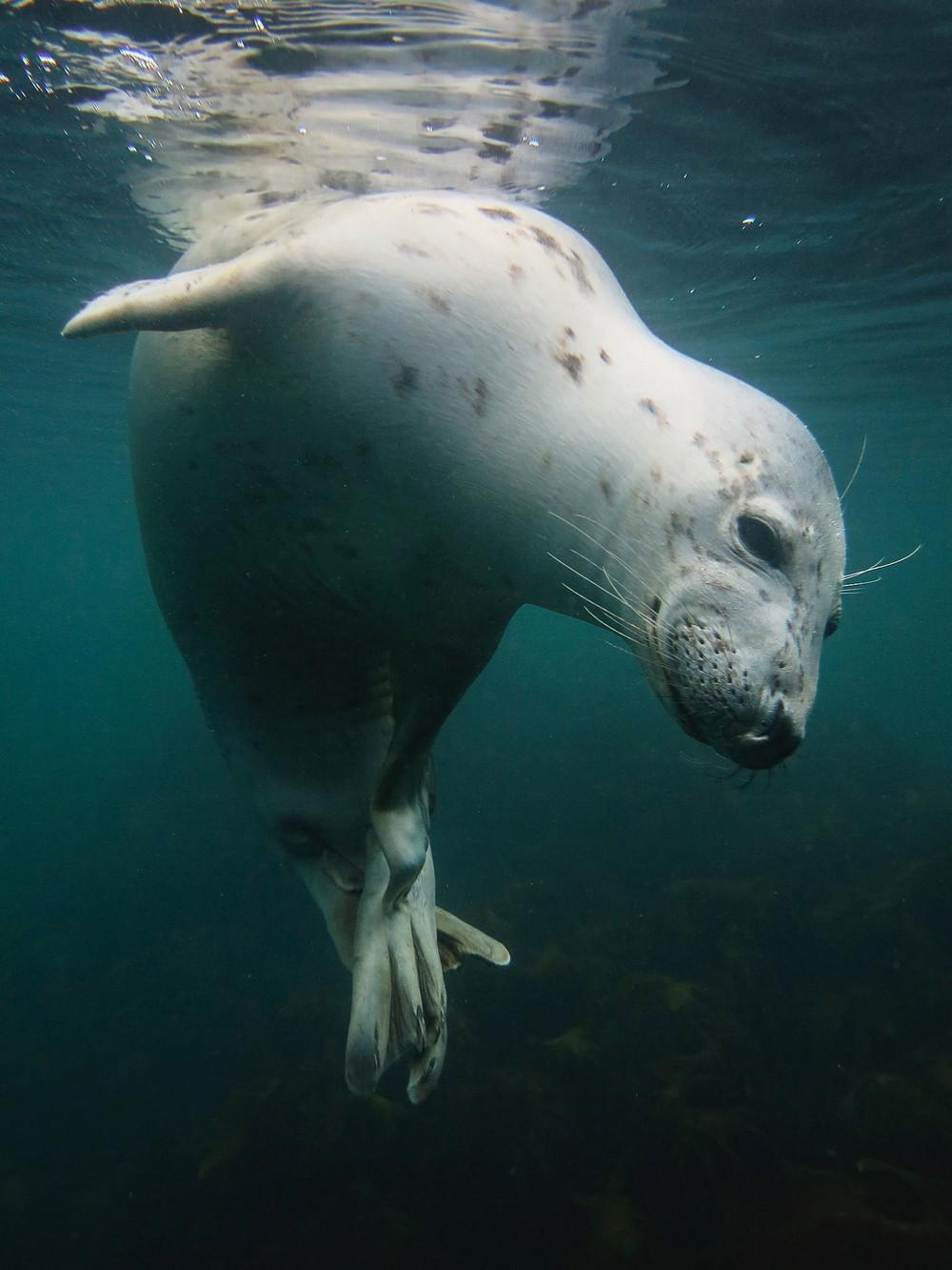 Победители конкурса подводной фотографии в 2018 году  11