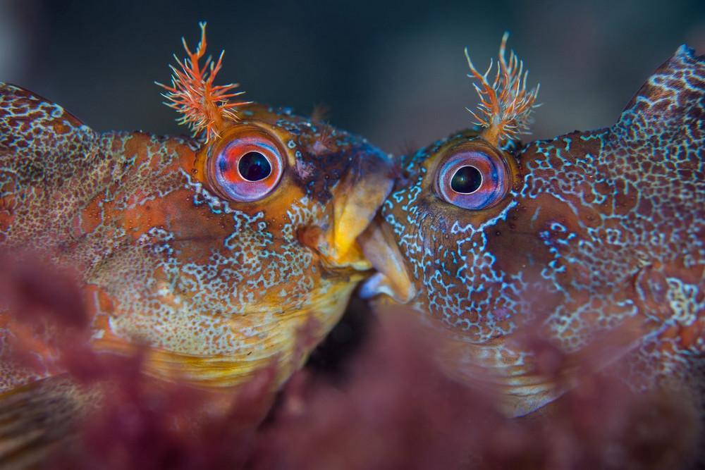 Победители конкурса подводной фотографии в 2018 году  8