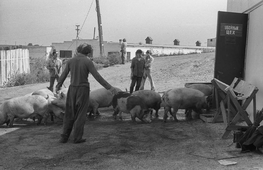 Социалистическая реальность в документальных фотографиях Владимира Воробьева 72