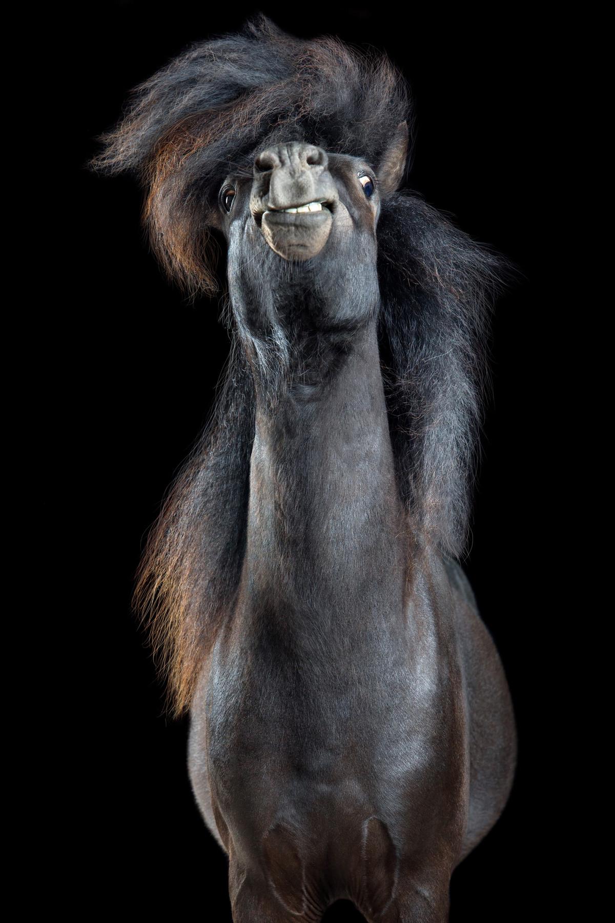 Притягательные гривы в фотографиях Вибке Хаас. Лошади, взмахивающие волосами 1