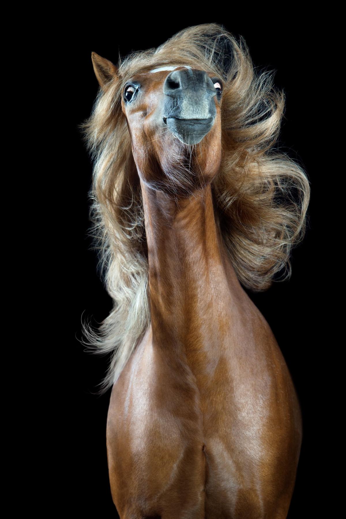 Прикольный конь в картинках