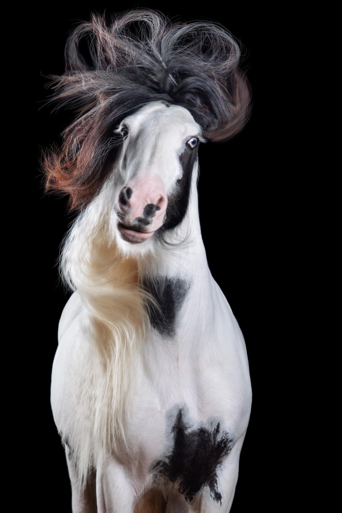 Притягательные гривы в фотографиях Вибке Хаас. Лошади, взмахивающие волосами 3