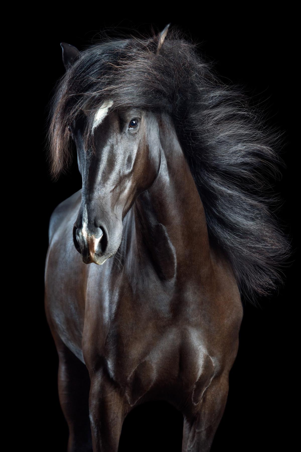 Притягательные гривы в фотографиях Вибке Хаас. Лошади, взмахивающие волосами 4