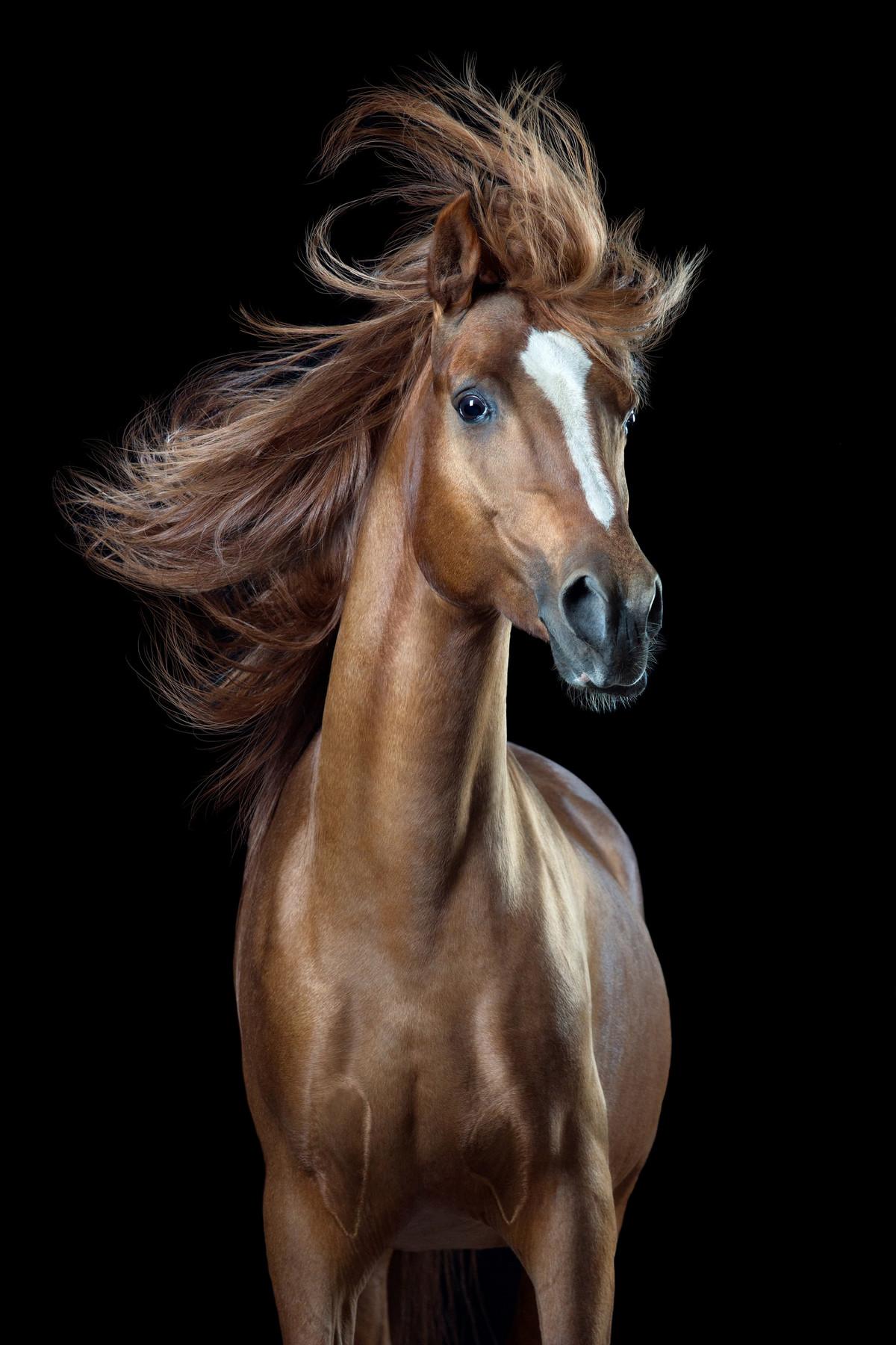 Притягательные гривы в фотографиях Вибке Хаас. Лошади, взмахивающие волосами 5