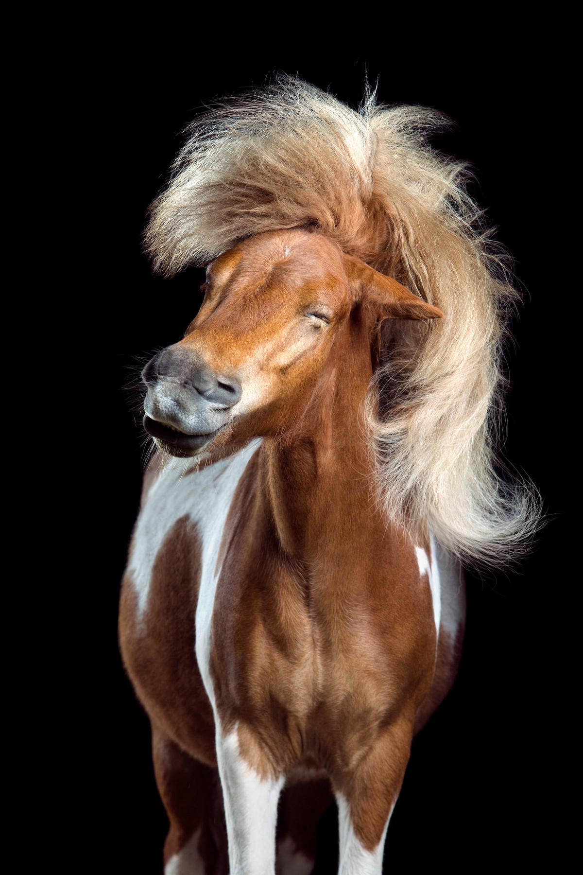 Притягательные гривы в фотографиях Вибке Хаас. Лошади, взмахивающие волосами 6