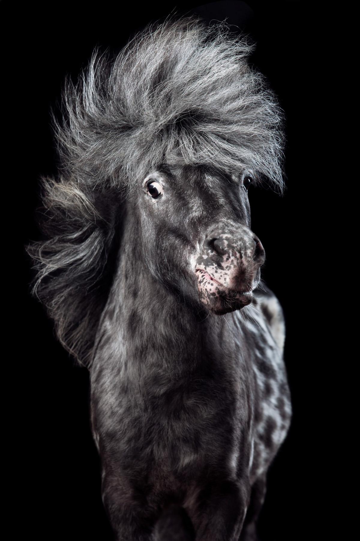Притягательные гривы в фотографиях Вибке Хаас. Лошади, взмахивающие волосами 7