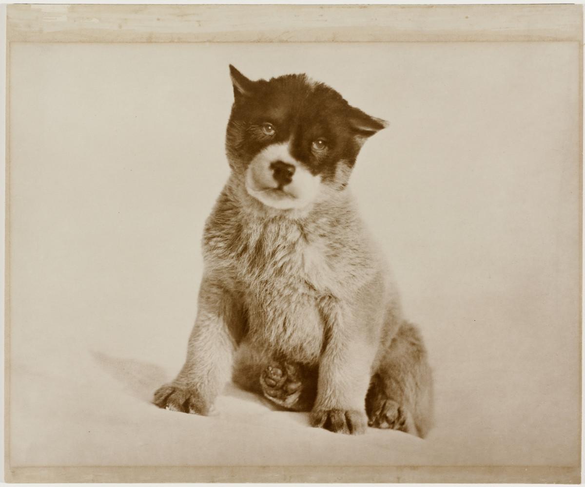 Первая Австралийская антарктическая экспедиция в фотографиях Фрэнка Хёрли 1911-1914 22