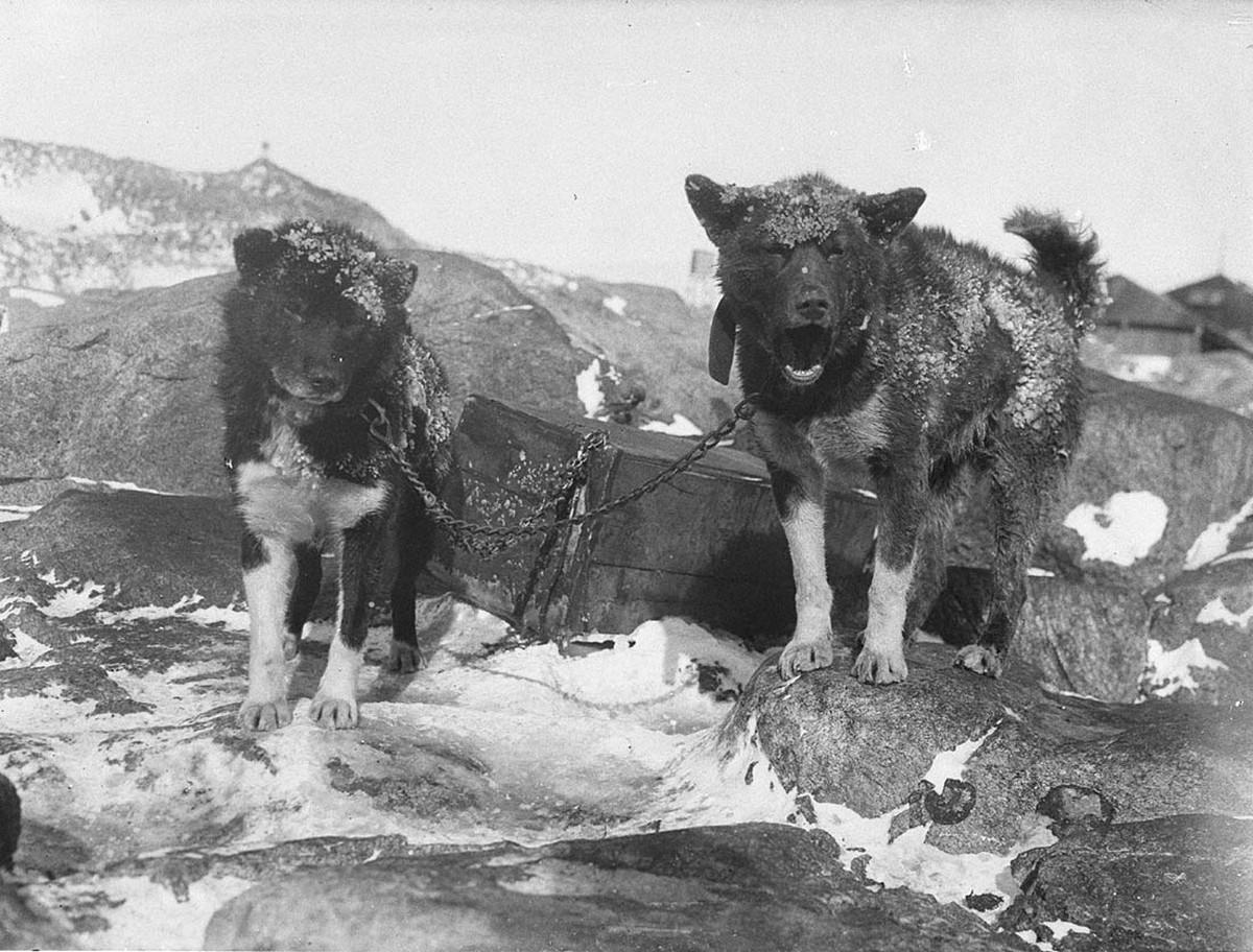 Первая Австралийская антарктическая экспедиция в фотографиях Фрэнка Хёрли 1911-1914 53