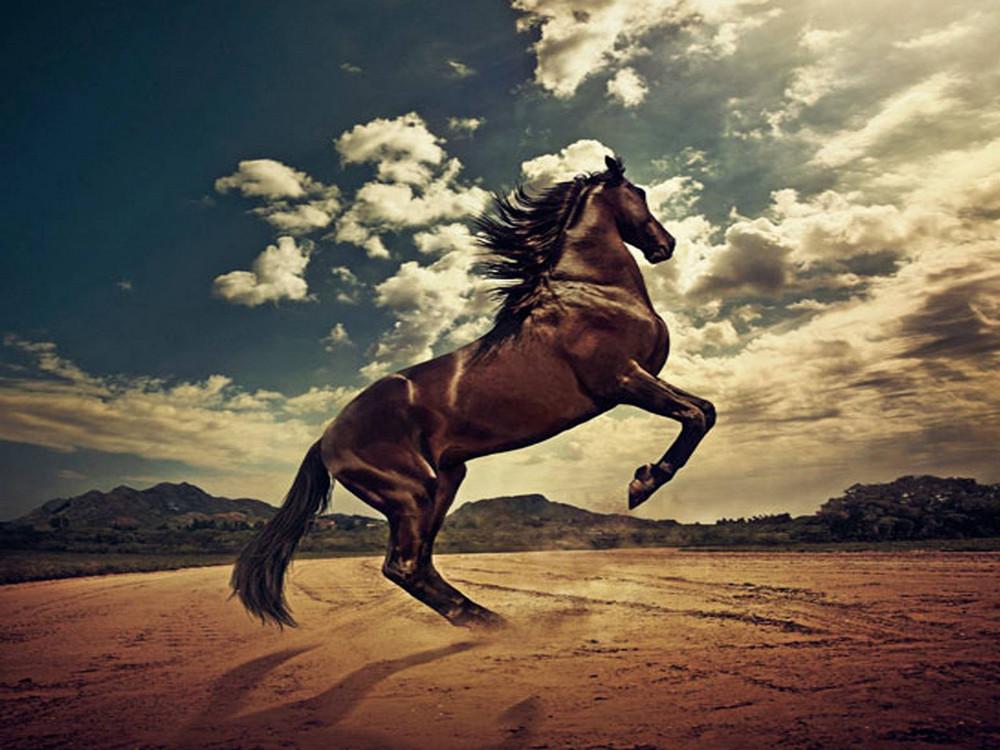 Гифка табун лошадей первую картину