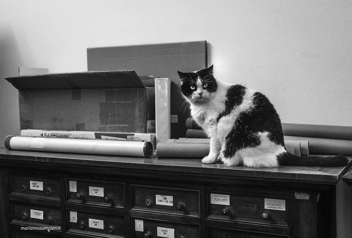 Фотографии кошек, которые живут в местах, где работают люди 10