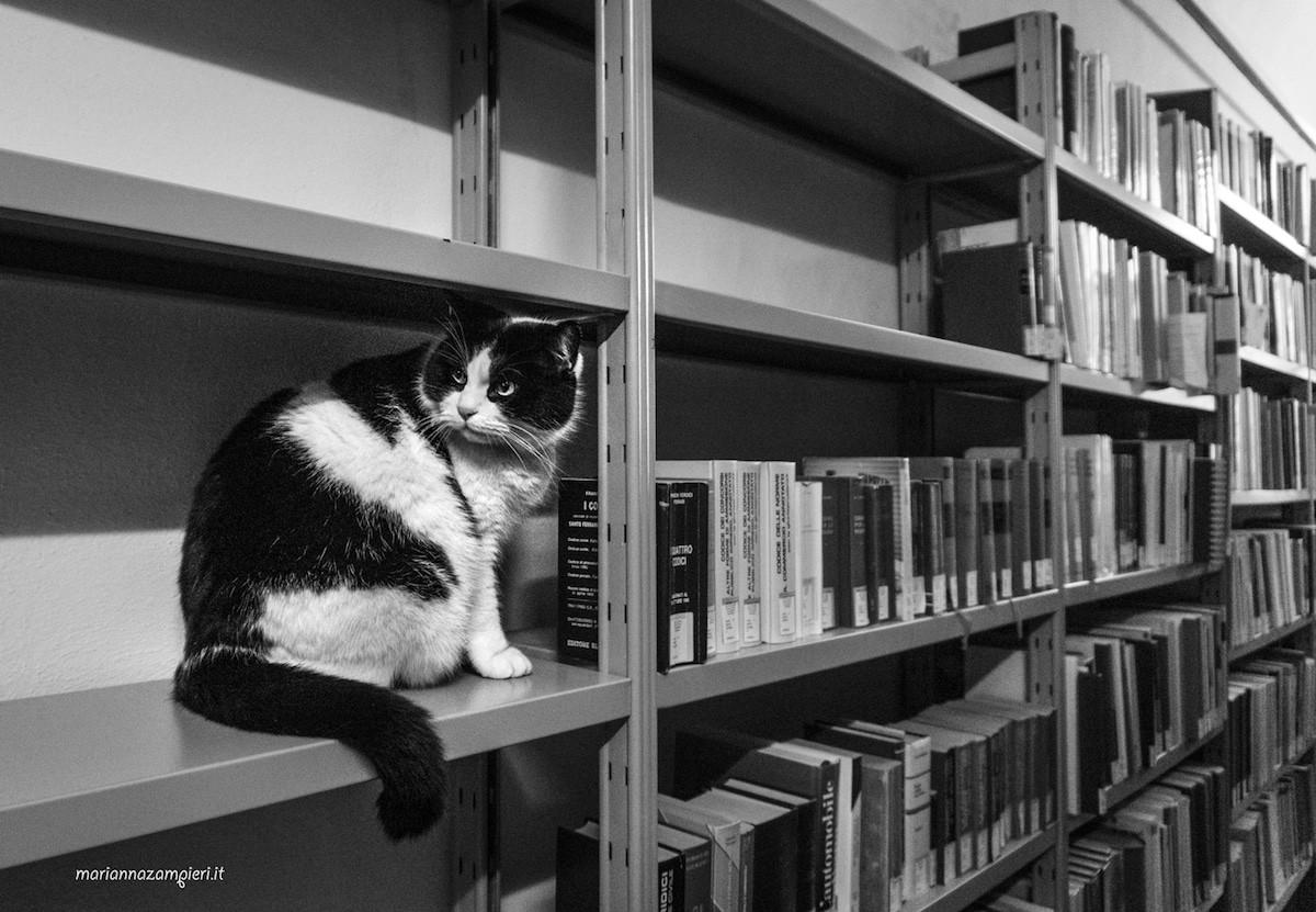 Фотографии кошек, которые живут в местах, где работают люди 11
