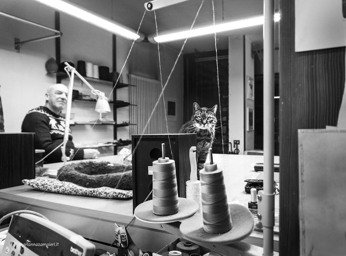 Фотографии кошек, которые живут в местах, где работают люди 15