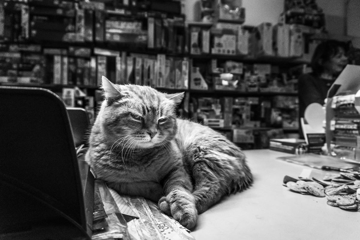 Фотографии кошек, которые живут в местах, где работают люди 18