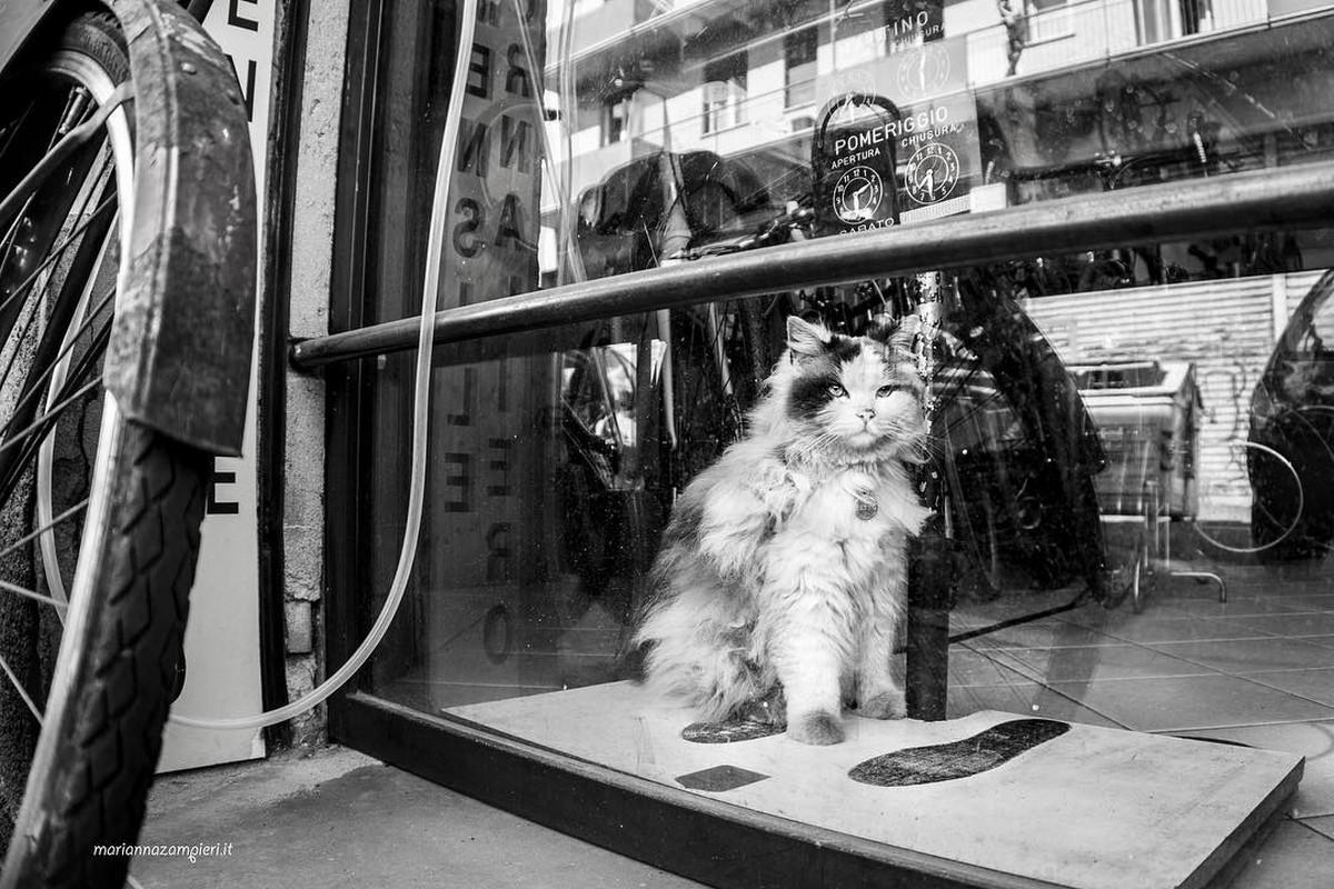 Фотографии кошек, которые живут в местах, где работают люди 21