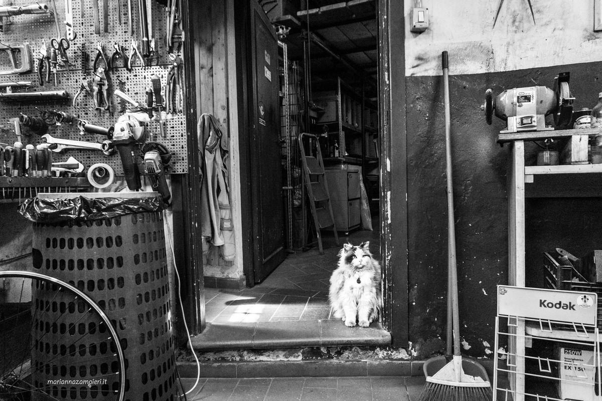 Фотографии кошек, которые живут в местах, где работают люди 22