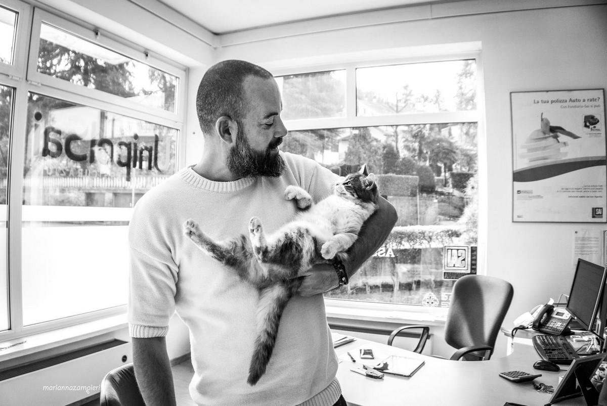Фотографии кошек, которые живут в местах, где работают люди 24