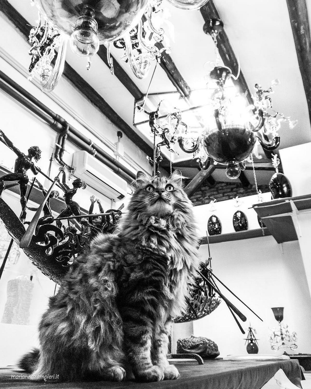 Фотографии кошек, которые живут в местах, где работают люди 25