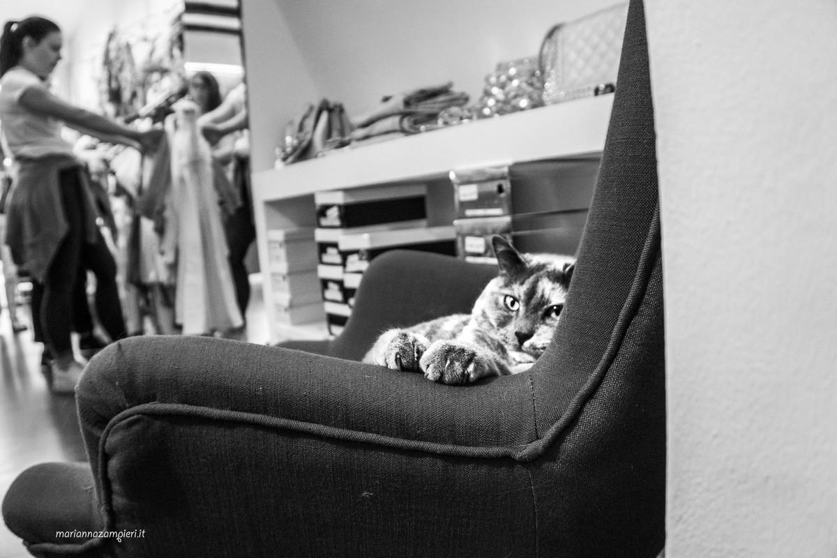 Фотографии кошек, которые живут в местах, где работают люди 28