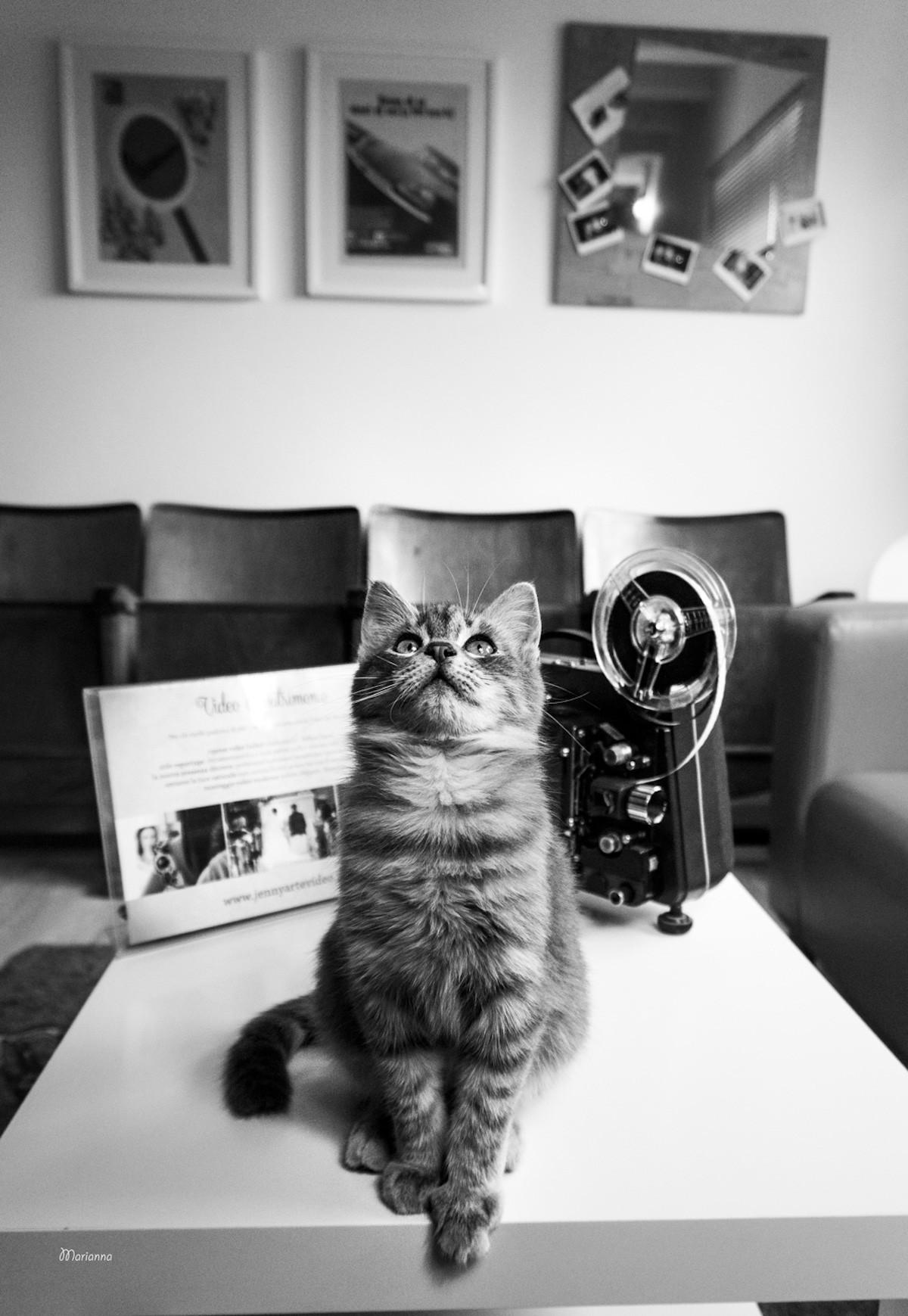 Фотографии кошек, которые живут в местах, где работают люди 4