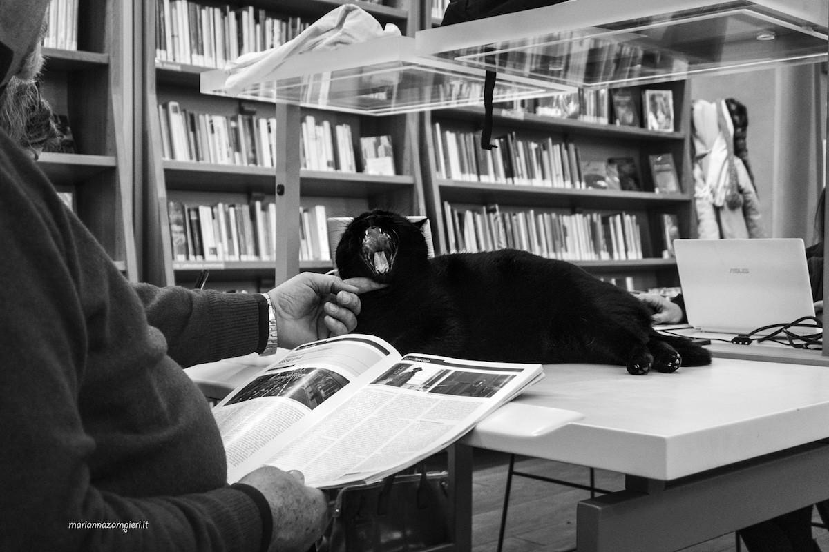Фотографии кошек, которые живут в местах, где работают люди 9