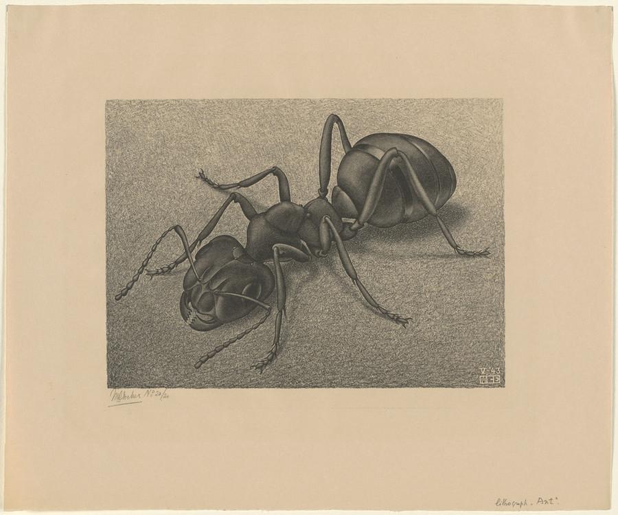 Онлайн-архив: оптические иллюзии и невозможные гравюры Маурица Эшера 5