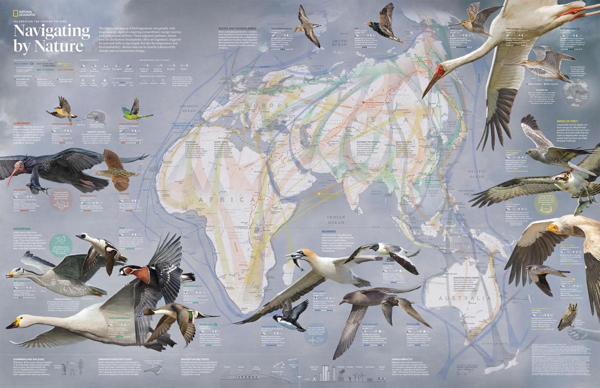 National Geographic оцифровал свою коллекцию карт за 130 лет. От карт звёзд до океанского дна  9