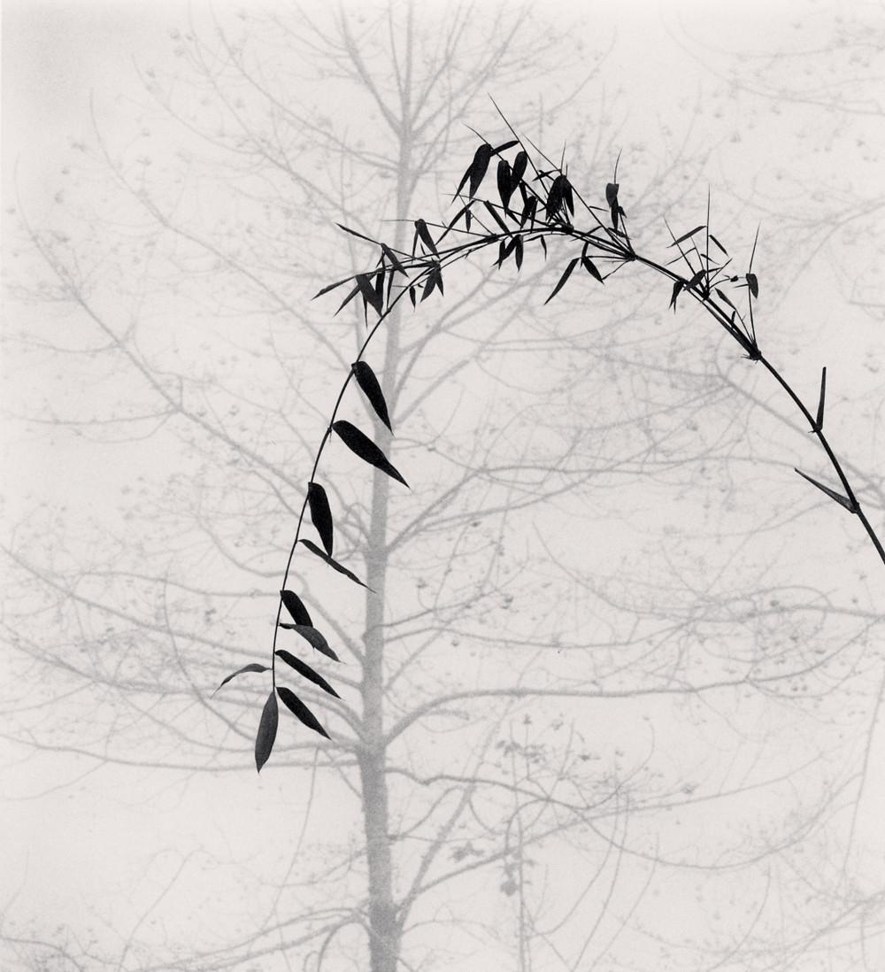 Портреты деревьев Майкла Кенны 14