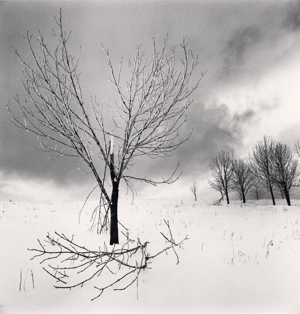 Портреты деревьев Майкла Кенны 15