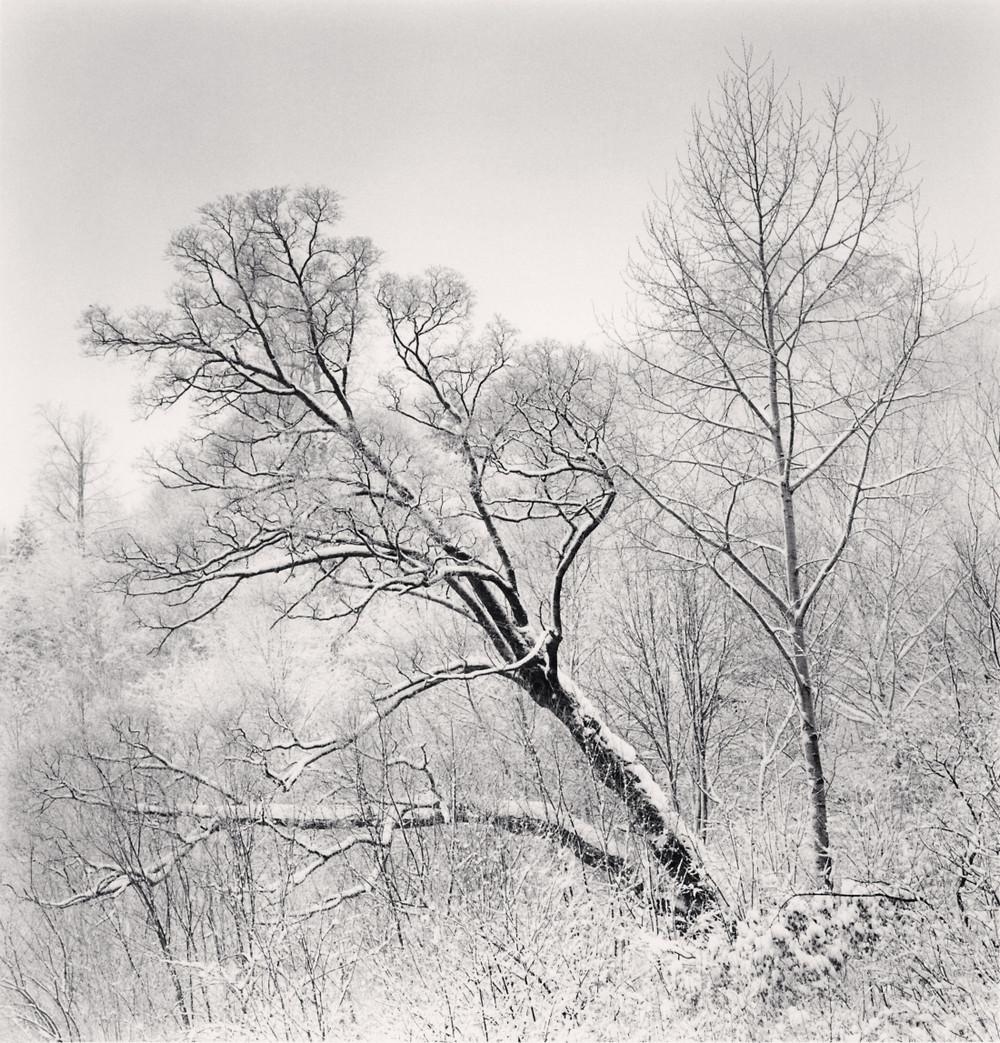 Портреты деревьев Майкла Кенны 17