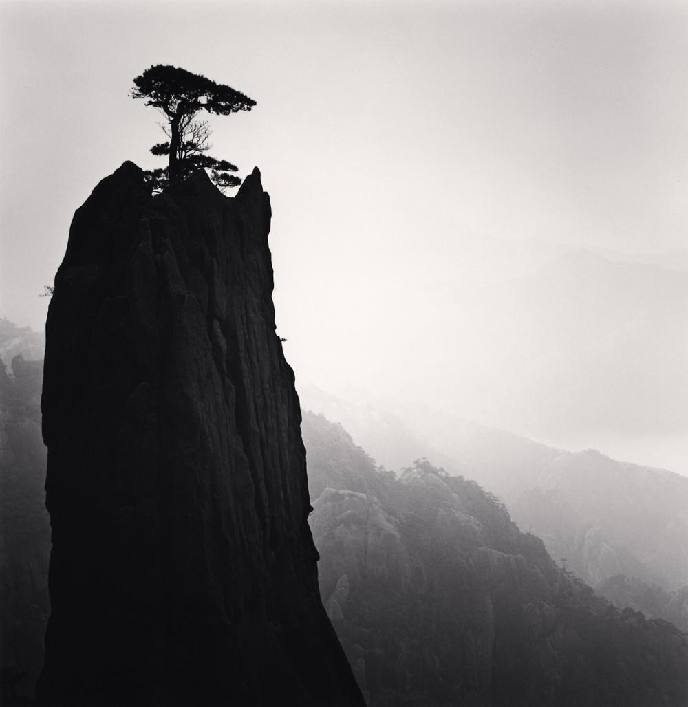 Портреты деревьев Майкла Кенны 20