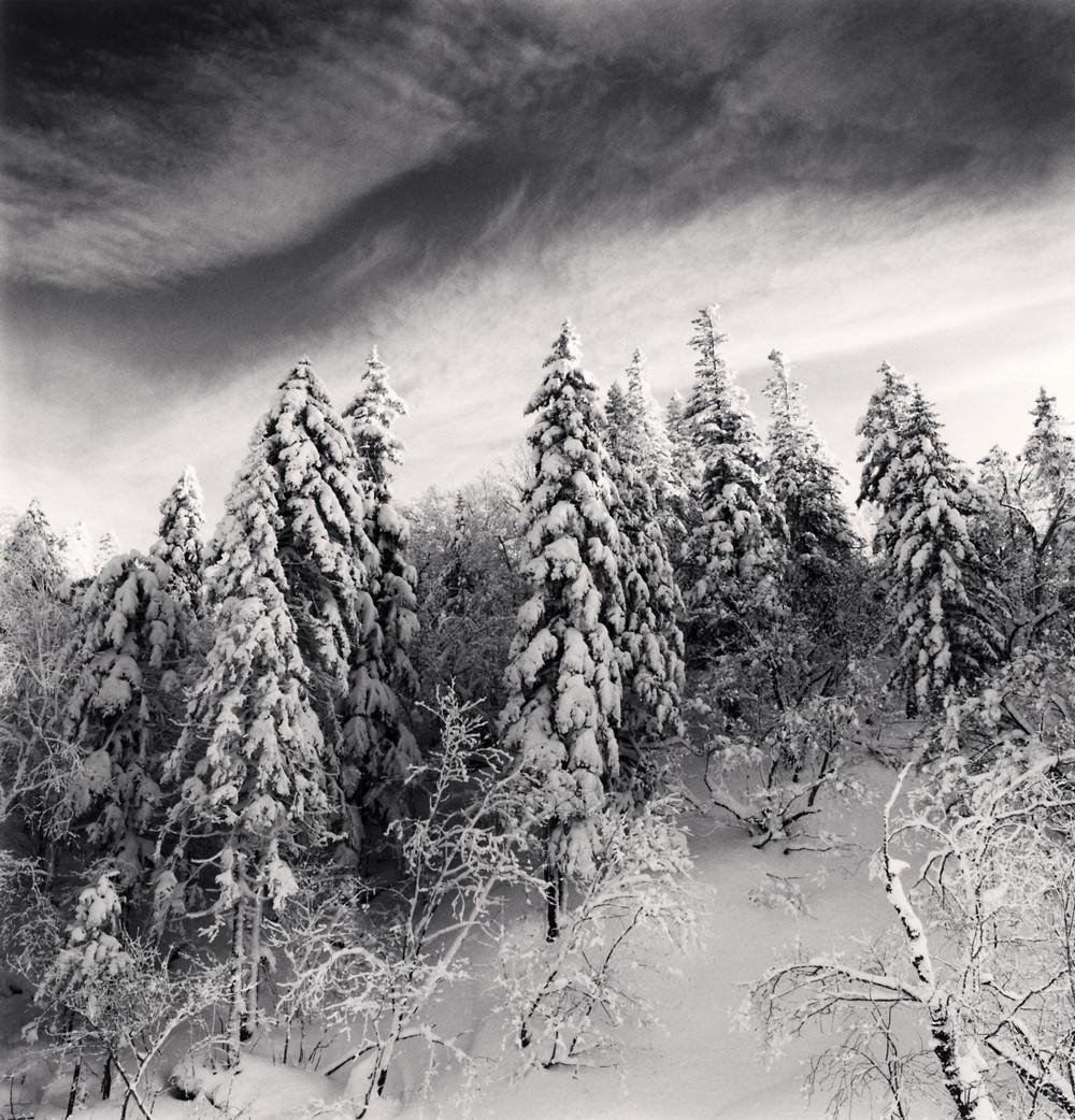 Портреты деревьев Майкла Кенны 24