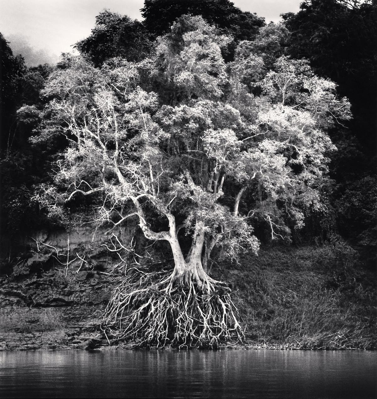 Портреты деревьев Майкла Кенны 6