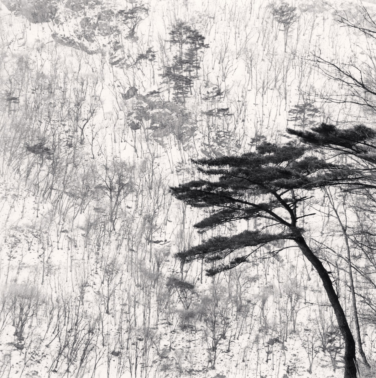 Портреты деревьев Майкла Кенны 7
