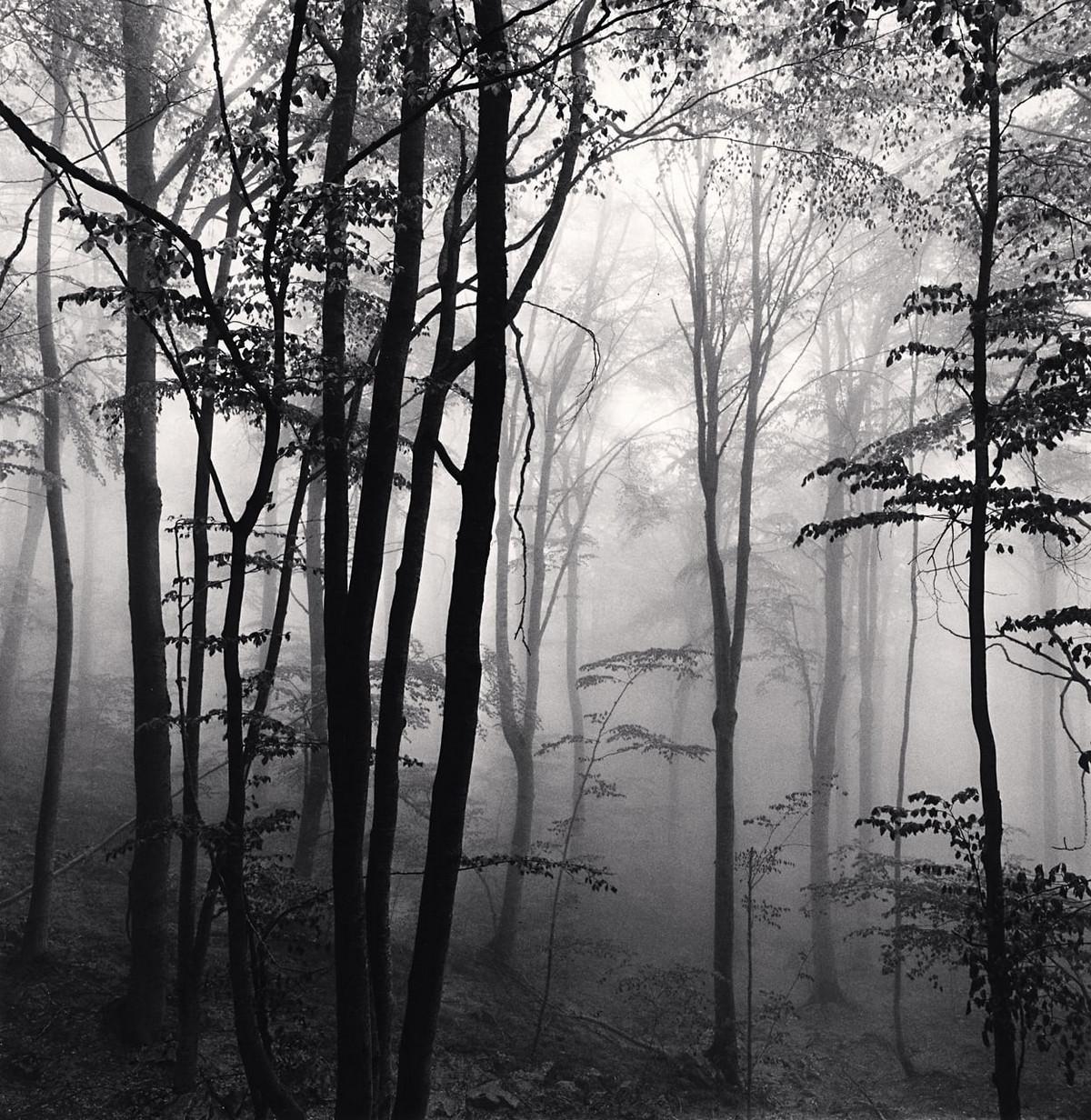Портреты деревьев Майкла Кенны 8
