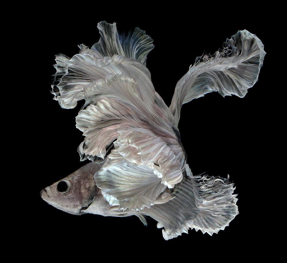 потрясающие фотографии рыб-16