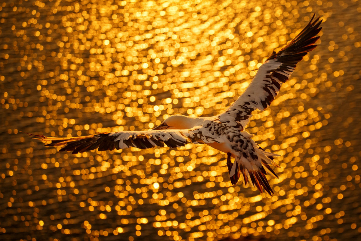 winners of the contest bird's photographer of the year 2018 14