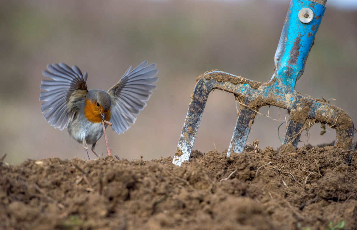 winners of the contest bird's photographer of the year 2018 16