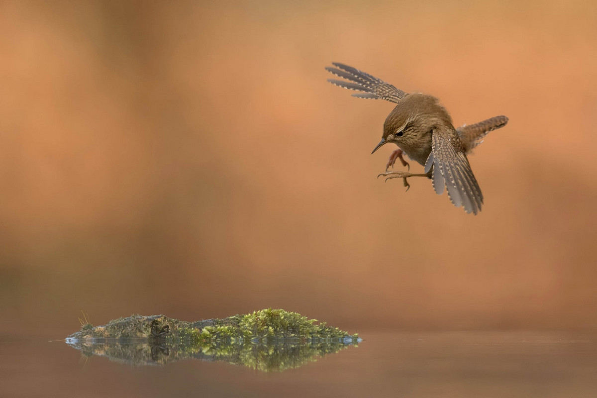 winners of the contest bird's photographer of the year 2018 20