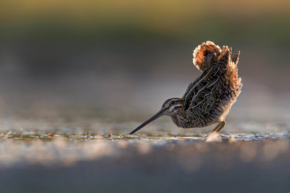 winners of the contest bird's photographer of the year 2018 22